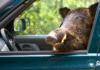 risarcimenti danni da fauna selvatica